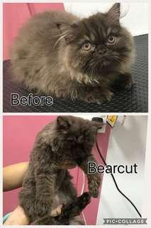 Cat Grooming by experienced lady veterinarian