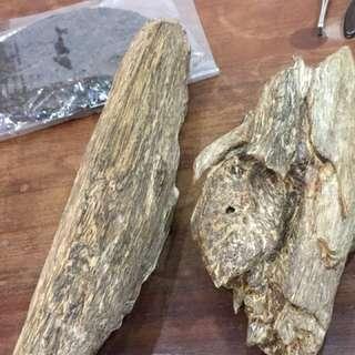 沉香。柬埔寨老料。半沉水准备成品。16mm预定的来。油脂含量非常丰富
