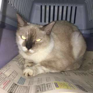 CAT IS NOW AVAILABLE FOR ADOPTION