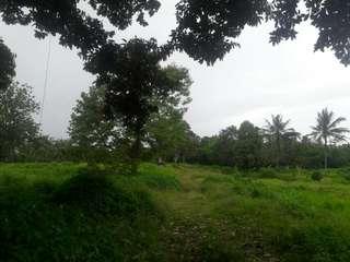 Dijual cepat tanah di tengah kotaserang . Sangat cocok untuk perkebunan ,perumahan maupun pabrik. Luas 3.3 ha.