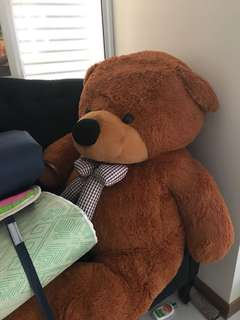 Huge Teddy Bear!