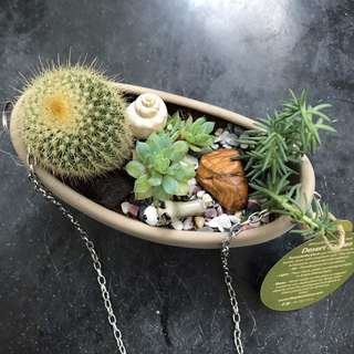 Terrarium from Plant Story