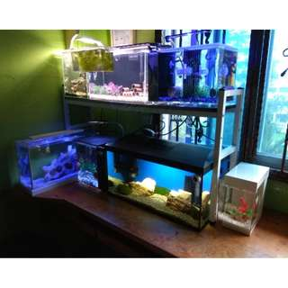 Branded Fish Tank With Invertebrates & Fish (Moving Out Sale)