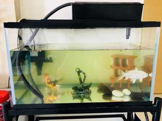 Fish Tank aquarium with power motor filter set