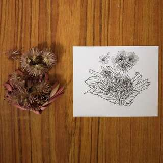 Chrysanthemum Dreaming