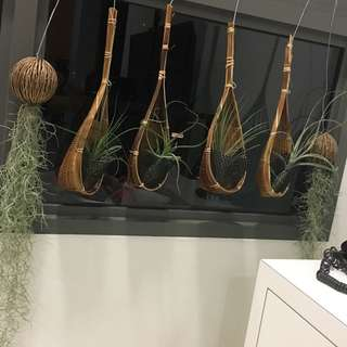 Airplants And hanging baskets for plantd