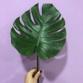 Live palm leaves for sale