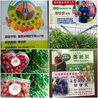 永豐農場-玉女小番茄