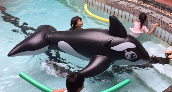 Pelampung dolphin ukuran besar