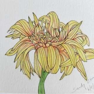 Chrysanthemum II