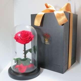 Preserved Flower - Glass Dome - The Enchanted Rose | Birthday Present | Gift Box | Rose | Wedding | BNIB |