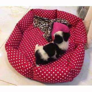 Dog Cat Rabbit Pets Bed Red White Polka Dots Large