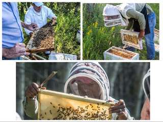 Peace River Honey有機加拿大🇨🇦白蜜