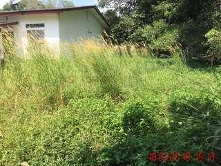 Potong Rumput / Pokok / Cat Rumah / Bersih Laman Rumah  / Cuci Rumah / Pindah Barang