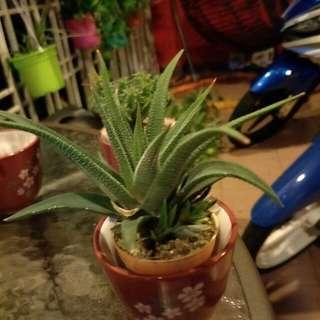 🌵 Cactus