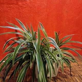 Plants Indoor Outdoor