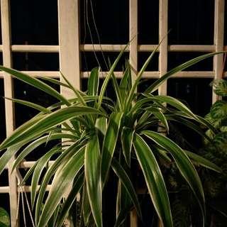 Hanging Plants Indoor Outdoor