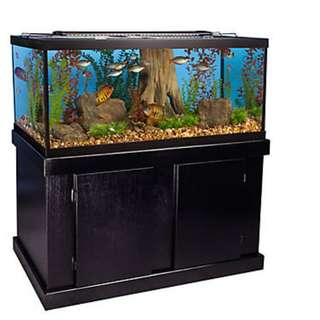 Aquarium Fish Tank set up