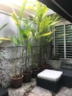 PLANTS AND POTS for sale