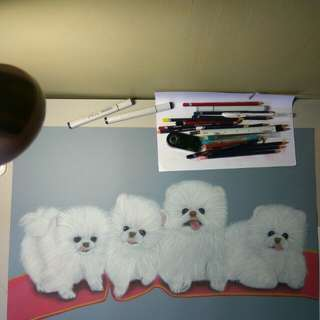 Pastel Color Drawing (Dogs)
