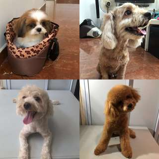 Pet grooming and boarding services
