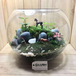 Luxury Gift for Mother's Day/ Birthday/ Congrats/ House warming/ Table Centerpiece - Real Plant moss Terrarium