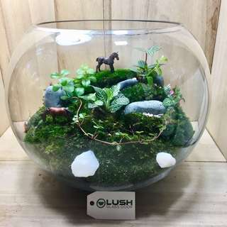 Luxury Gift for Birthday/ Congrats/ House warming/ Table Centerpiece - Real Plant moss Terrarium
