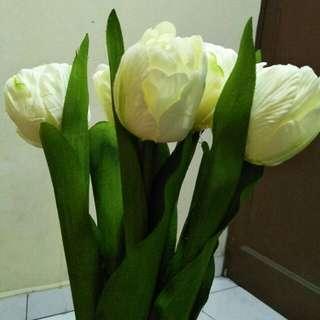 Saya jual bunga Tulip baru