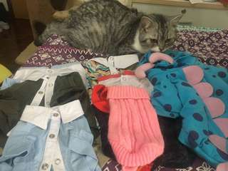 My cat selling cloths if someone interest  plz pm my cat 😻feel free 😺