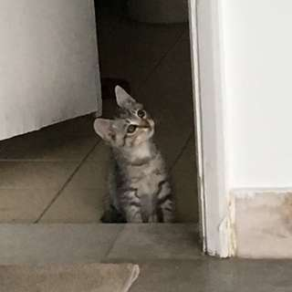 Smart kitten for adoption