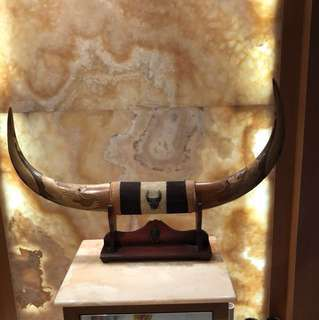 Horn display antique