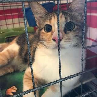 Cat Boarding / Pet hotel