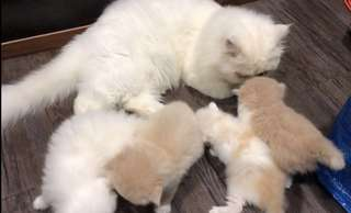 Kittens for rehome