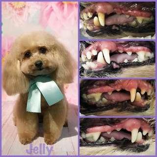 狗洗牙 寵物洗牙 狗除牙石 寵物除牙石 免麻醉洗牙
