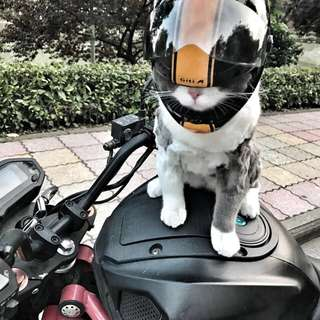 Cat helmet ebike motorbike escooter bicycle full face protection