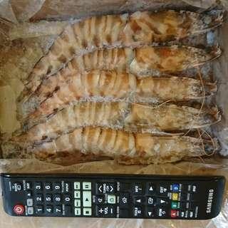 特大竹蝦隻(5隻)1kg, 鮮味有膏。