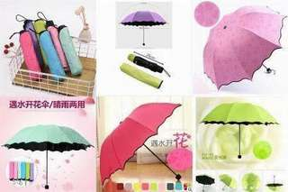 Fabric Changing Umbrella Design Reveal when Wet