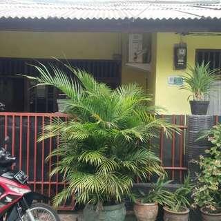 Rumah murah di Bekasi timur