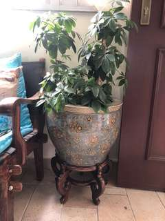 Big pot with plant and stand