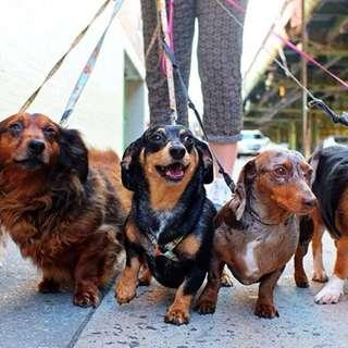 Dog Walking / Pet Sitting / Mobile Grooming - CCK
