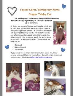 In need of a foster carer/temporary home!