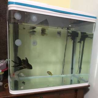 Fish tank (2ft) Rs Electrical