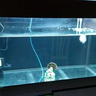 3 ft fish tank with cabinet