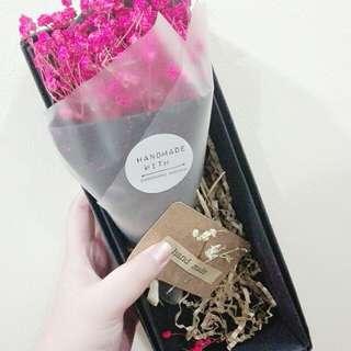 韩国粉色满天星🌸