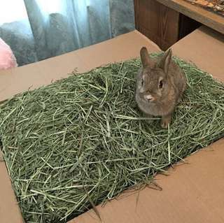 Rabbit Hay- Timothy Hay