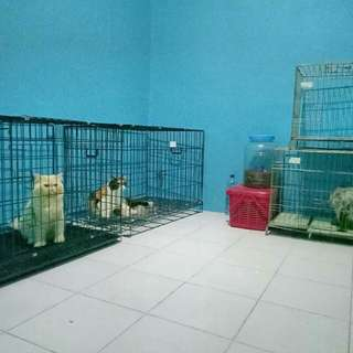 Penitipan Kucing (Cat House)