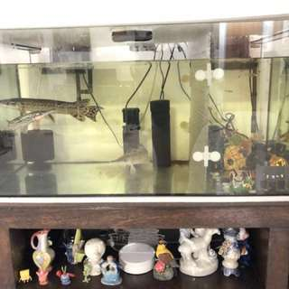 GAR FISH , TANK, TABLE