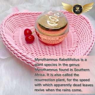 Wowo Myrothamnus Flabellifolia Face Cream 50ml