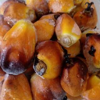 Oil palm seed
