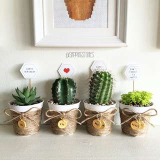 Personalised Cactus & Succulents in Pot